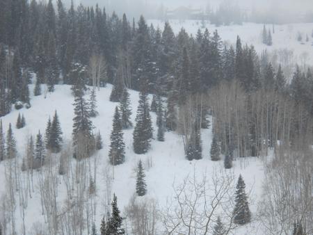 Snowy Hillside Stok Fotoğraf