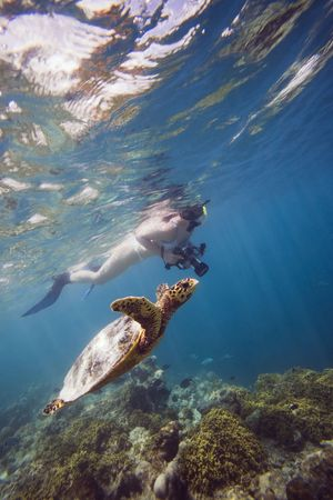 dive trip: girl swimming with turtle