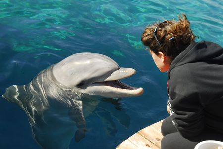 A Dolphinarium Eilat in the Israel
