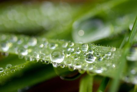herbage: A lush green grass with dew