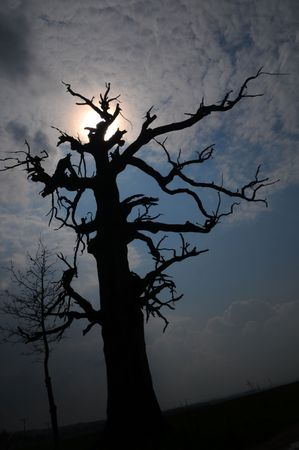 unearthly: The outline of the tree.