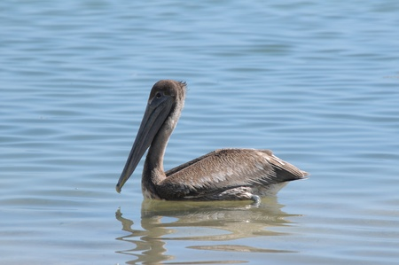 Bird living close to beach of Xcalak in Mexico Stock Photo - 10375763
