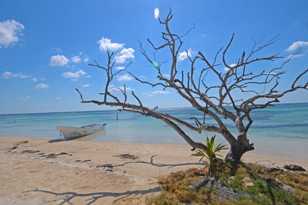 Dry tree on the beach of Mahahual  in Mexico