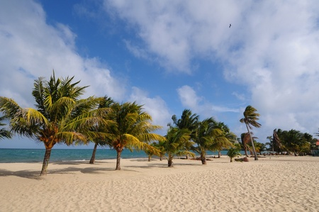 Beach with the palm trees  in Belize, Placencia