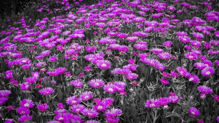 Purple flower in the brash