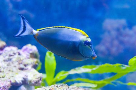 reeffish: cute fish in an aquarium. Park. Donetsk. Ukraine