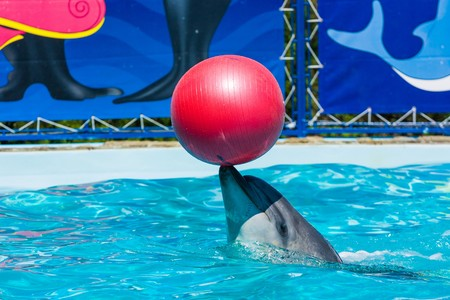 submission: Dolphins and other marine animals performs trick submission