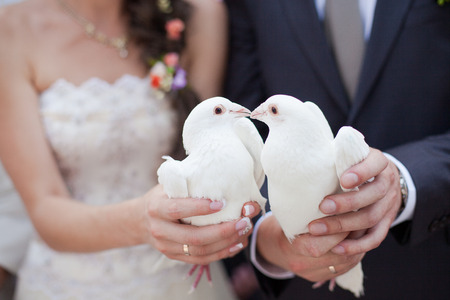 paloma blanca: Dos doves.Wedding blanco