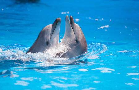 unify: pair of dolphins dancing in water Stock Photo