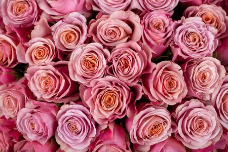 Bright background of natural pink roses. Delivery flowers.