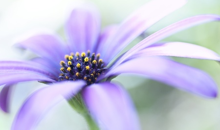 Closeup of a purple flower with a shallow deph of field Stock Photo