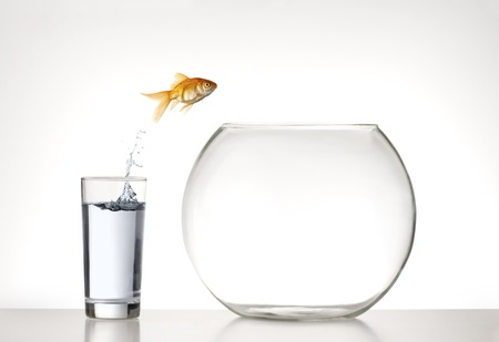 Goldfish jumpimg from a glass of water into an empty fishbowl Stock Photo
