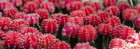 Close up of a flowering cactus