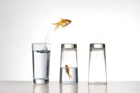 A Goldfish jumping over a couple of glasses