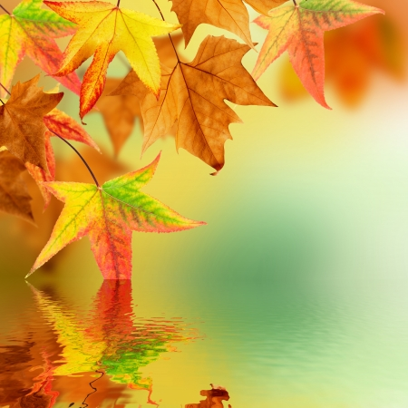 shallow water: Autumn leaves pending over water