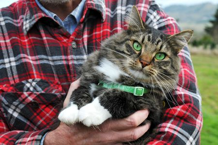 humane: Animal Rescue Protection Man holding a maine coon cat with green eyes and collar Stock Photo