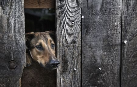 A poor dog trapped behind a fence