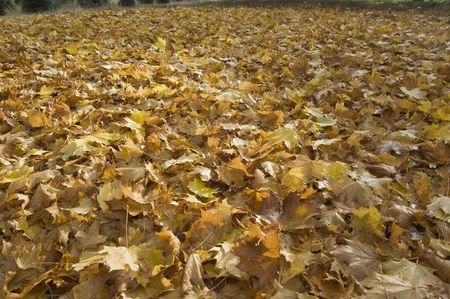 Damp leaves right after it has been done raining.