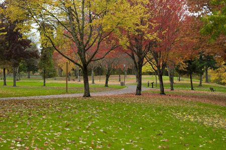 eugene: A park in Eugene, Oregon with lots of trees. Image taken in october and the park has pathways and lots of fresh grass.