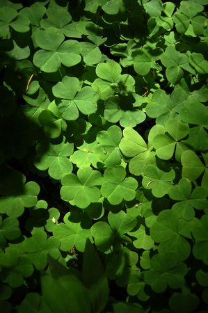 A Green clover patch background with nice soft lighting Stock Photo - 6044466