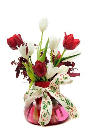 hollyberry: Red and white Tulips in glass vase with a Christmas Holly berry themed ribbon around the vase isolated on white background