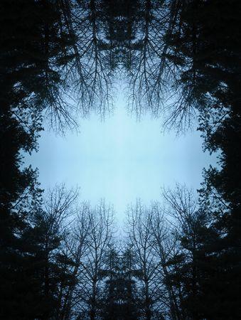 enclosures: Dark moody foresta con alberi neri, raggiungendo fino verso il cielo. Archivio Fotografico