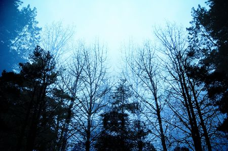 dark: Dark moody forest with black trees reaching up towards the sky.