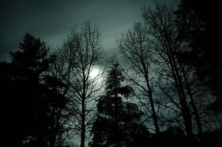Silhouette of trees against the bright moon light of the night with motion blurred clouds passing by in front of it. Archivio Fotografico