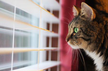 그의 주인이 집에 갈 때까지 기다리는 고양이. 그는 곧 집에 갈 수 있기를 희망하면서 창밖을 내다보고 있습니다.