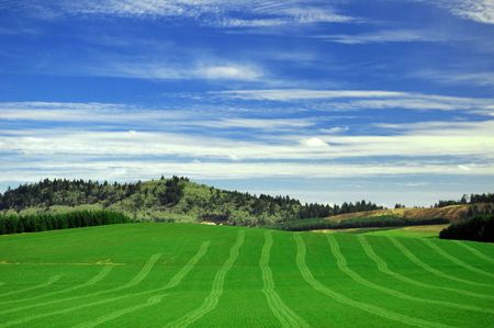 Green field freshly cut with lawn lines showing. Blue sky and green grass with mountains in between. photo