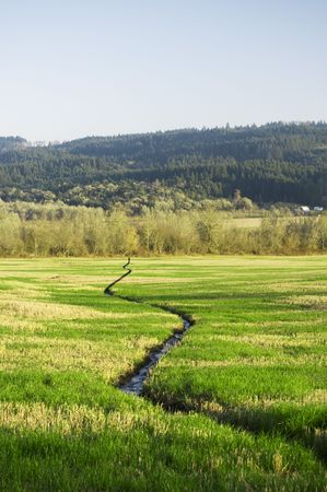 tributary: A narrow water river stream going through a green grass field landscape. Stock Photo