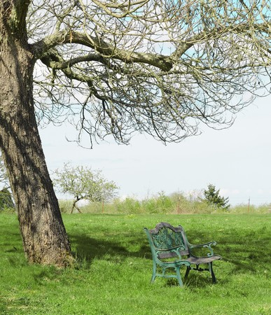 Single wooden bench under one tree in a grass field photo