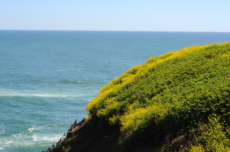 dropoff: Large cliff with grass and yellow flowers growing on the top of it with the ocean right underneath
