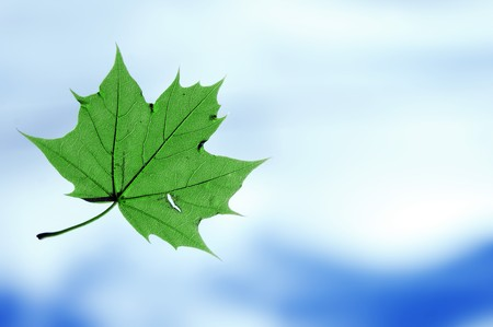 Closeup of a green leaf from a tree, flying around below the sky. photo