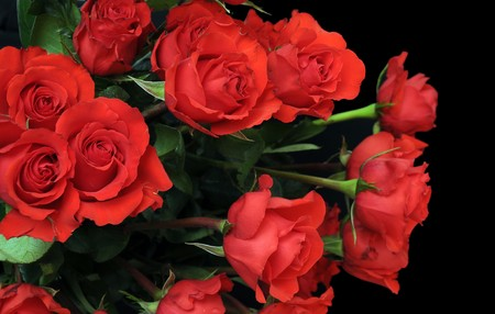 Roses on black background with the green stems included. The red roses are hanging out of a vase. Copyspace with room for your text.