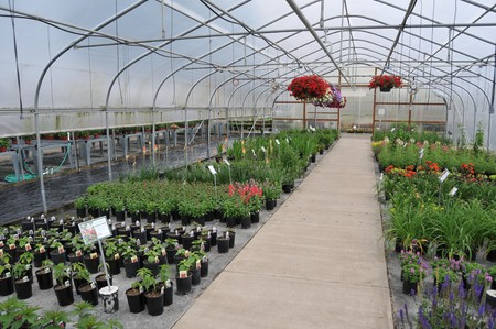growing inside: A bunch of potted plants growing inside a greenhouse nursery. Stock Photo