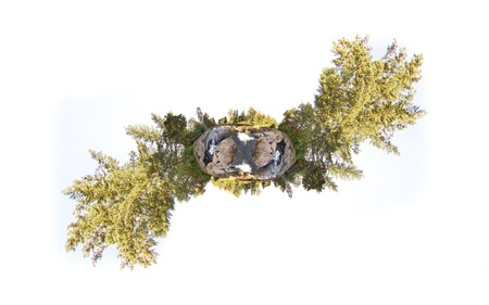 equirectangular: A little tiny planet of an earhtly rocky river with trees and sky with trees sticking out to make a cool design