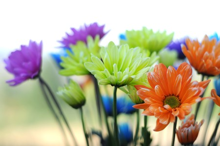 daisys: A bunch of multicolored daisy flowers standing up inside a vase. This image makes a good background. Stock Photo