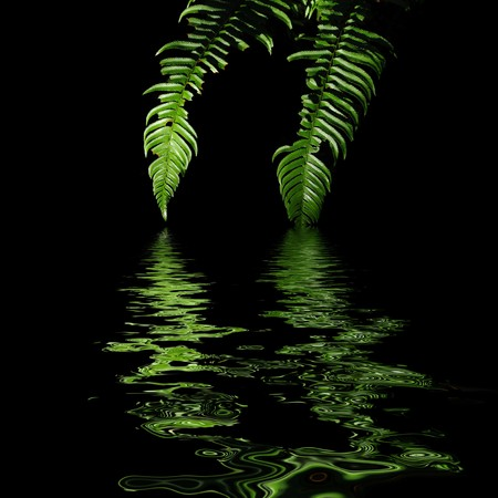 lowkey: the leaf of a fern dripping down into a body of water