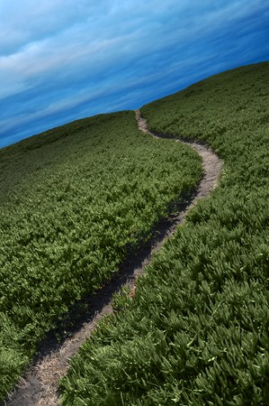 Narrow dirt pathway going through green ice plant off into the horizon with blue overcast clouds above photo