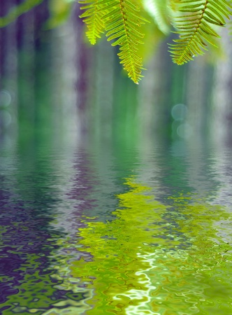 Green ferns in the forest with a blurry background and water reflection photo