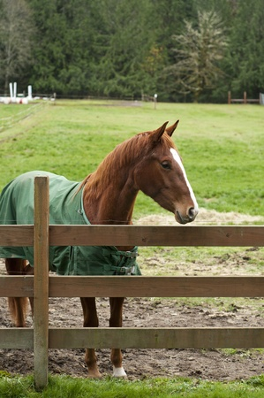 A brown horse behind a wooden fence in a large stable photo