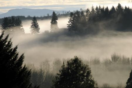 早朝に木の山丘倒れる厚い霧と霧