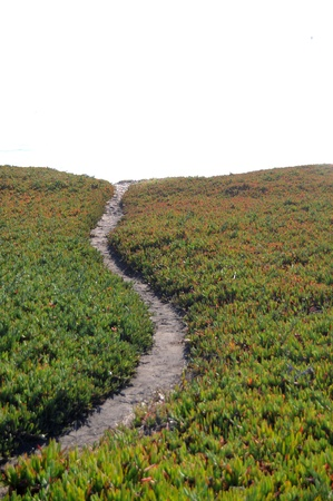 Narrow dirt pathway going through green ice plant off into the horizon with white copyspace above. photo