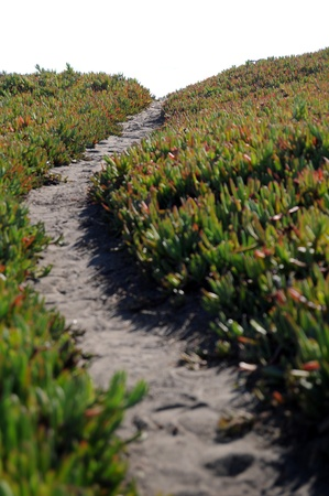 Narrow dirt pathway going through green ice plant off into the horizon with white copyspace above. Very shallow depth of field with the focus point on the horizon, photo