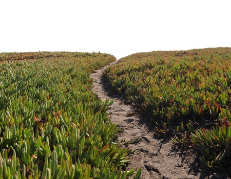 narrow depth of field: Narrow dirt pathway going through green ice plant off into the horizon with white copyspace above. Very shallow depth of field with the focus point on the horizon,