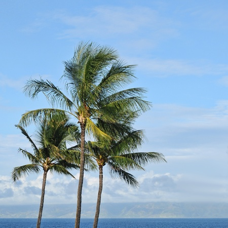 Three tropical palm trees against the background of a blue sky and ocean beach sea waters on the horizon with copyspace. photo