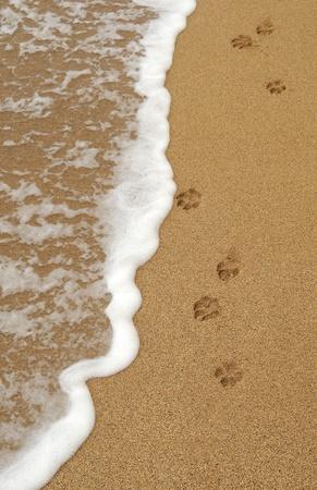 4 つの孤立した犬の足はビーチで砂に残った足跡