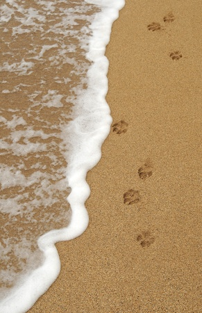 trace: Four isolated dog paw footprints in the sand on a beach