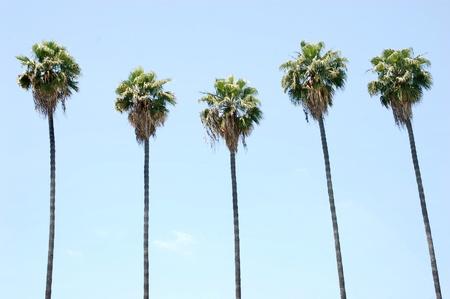 青い空を背景多くのヤシの木の行